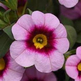 Calibrchoa Minifamous Neo Light Pink