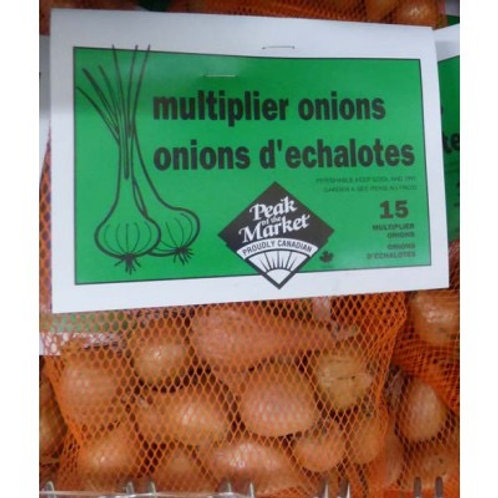 Onion Sets - Multipliers 12 Bulbs