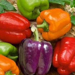 Pepper Bell Rainbow Mix