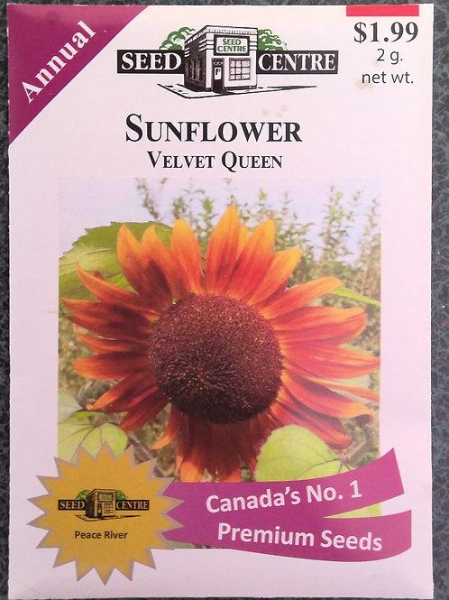 Sunflower Velvet Queen (Annual Flower)