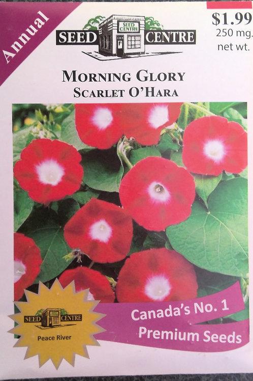 Morning Glory Scarlet O'Hara (Annual Flower)