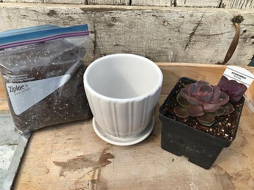 Succulent Kit #1