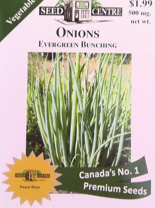 Onions Evergreen Bunching