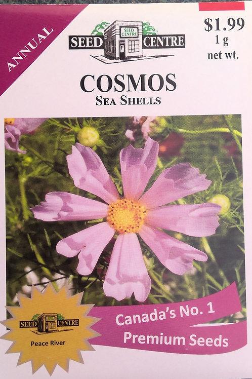 Cosmos Seashells (Annual Flower)