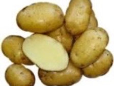 Seed Potatoes - Bintje 5 lb Bag (in store pick up only)