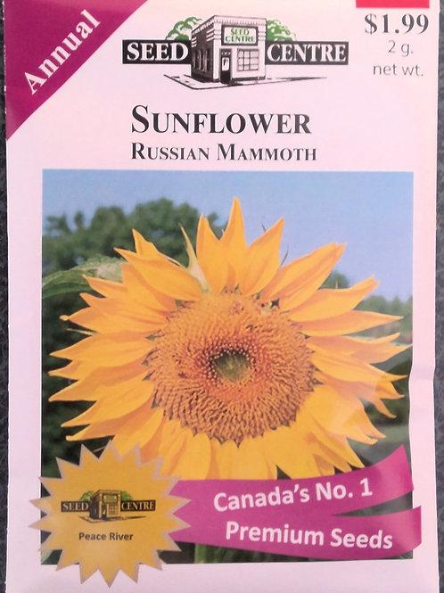 Sunflower Russian Mammoth (Annual Flower)