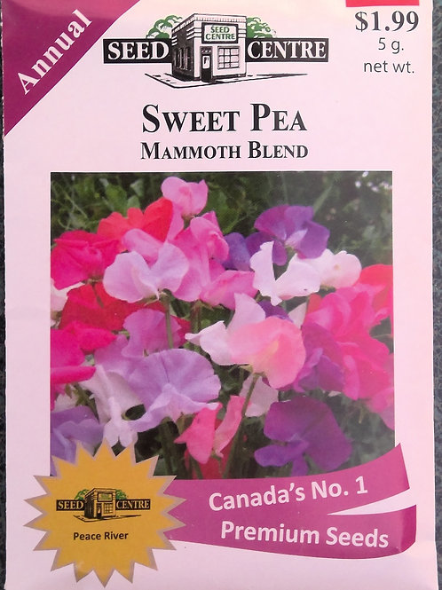 Sweet Pea Mammoth Blend (Annual Flower)