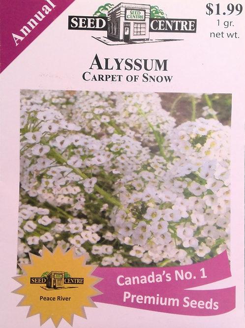 Alyssum Carpet of Snow (Annual Flower)