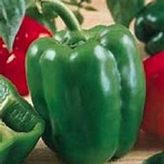 California Wonder Pepper