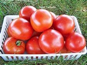 Super Fanastic Tomato