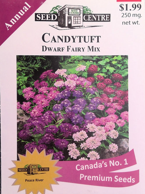 Candytuft Dwarf Fairy Mix (Annual Flower)