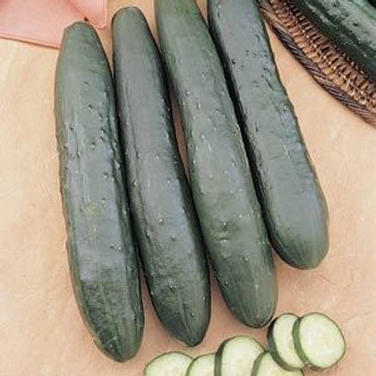 Burpless Supreme Long English Cucumber