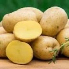 Seed Potatoes - Yukon Gold 5 lb Bag (in store pick up only)