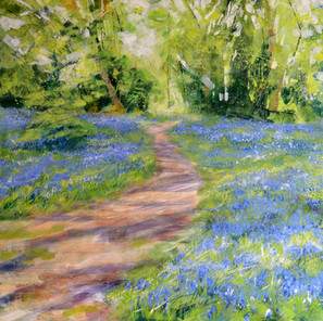 BLUEBELLS AND LIGHT