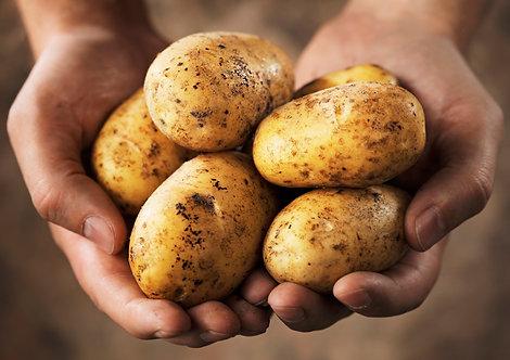 25kg Salátová odrůda
