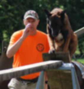 malinois,belgium,breeder,working dog,german sheperd,prok9,detection dog,explo dog,search dogs,rescue dogs,law enforcement dogs, sport dogs, IPO