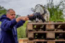 Springer spaniel pour la détection à l'élevage De La Noire Alliance