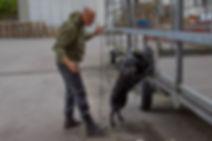 Chien de détection à l'élevage De La Noire Alliance