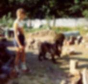 Malinois et bergers allemands à l'élevage De La Noire Alliance