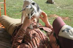 Goat yoga?