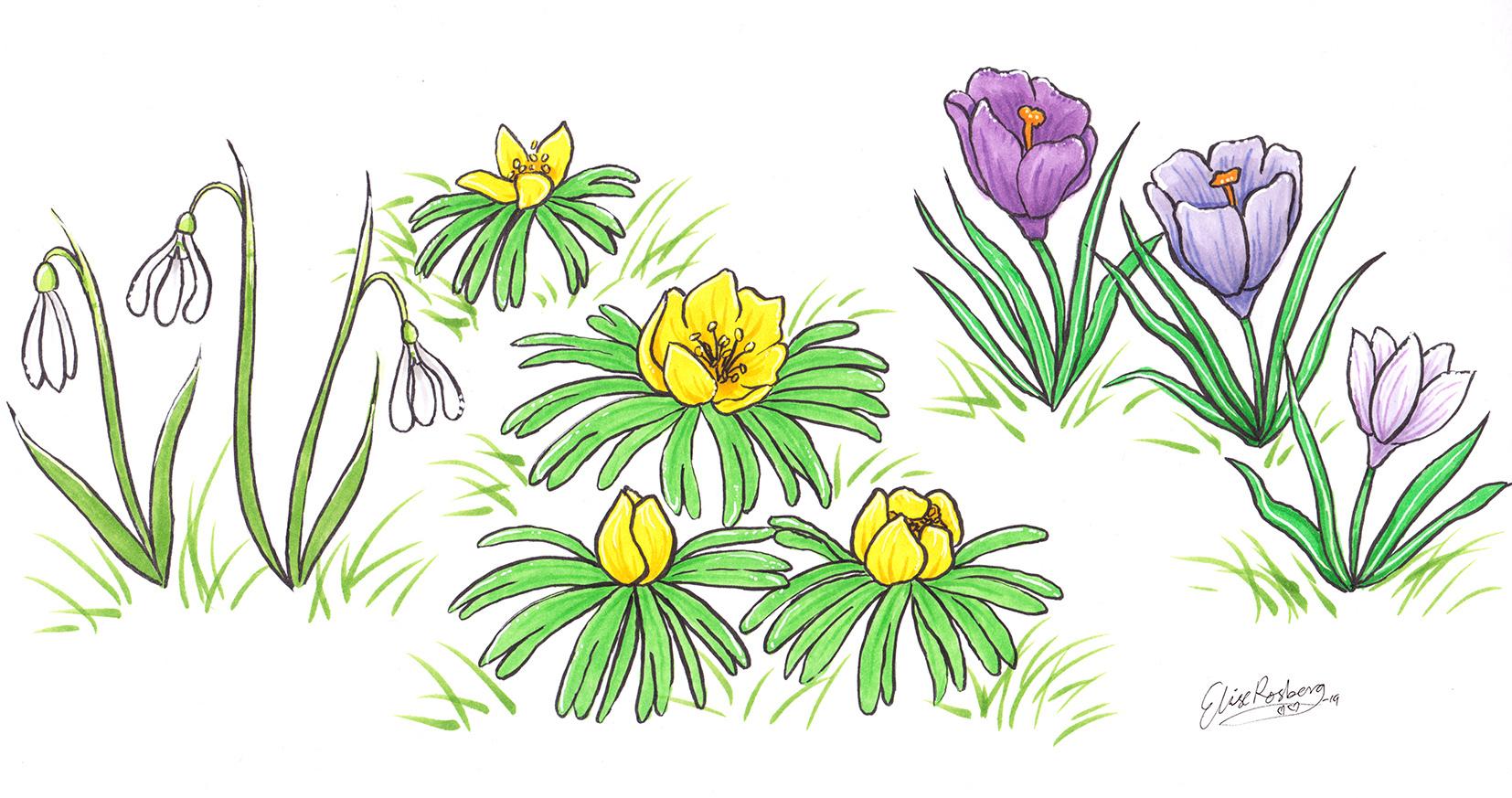 springflowers-s.jpg