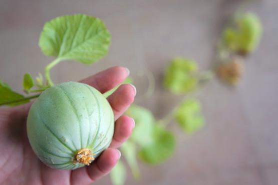 Mini-melons rentrent au bercail !!!