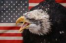 iconic-image-of-usa-flag-with-bald-eagle