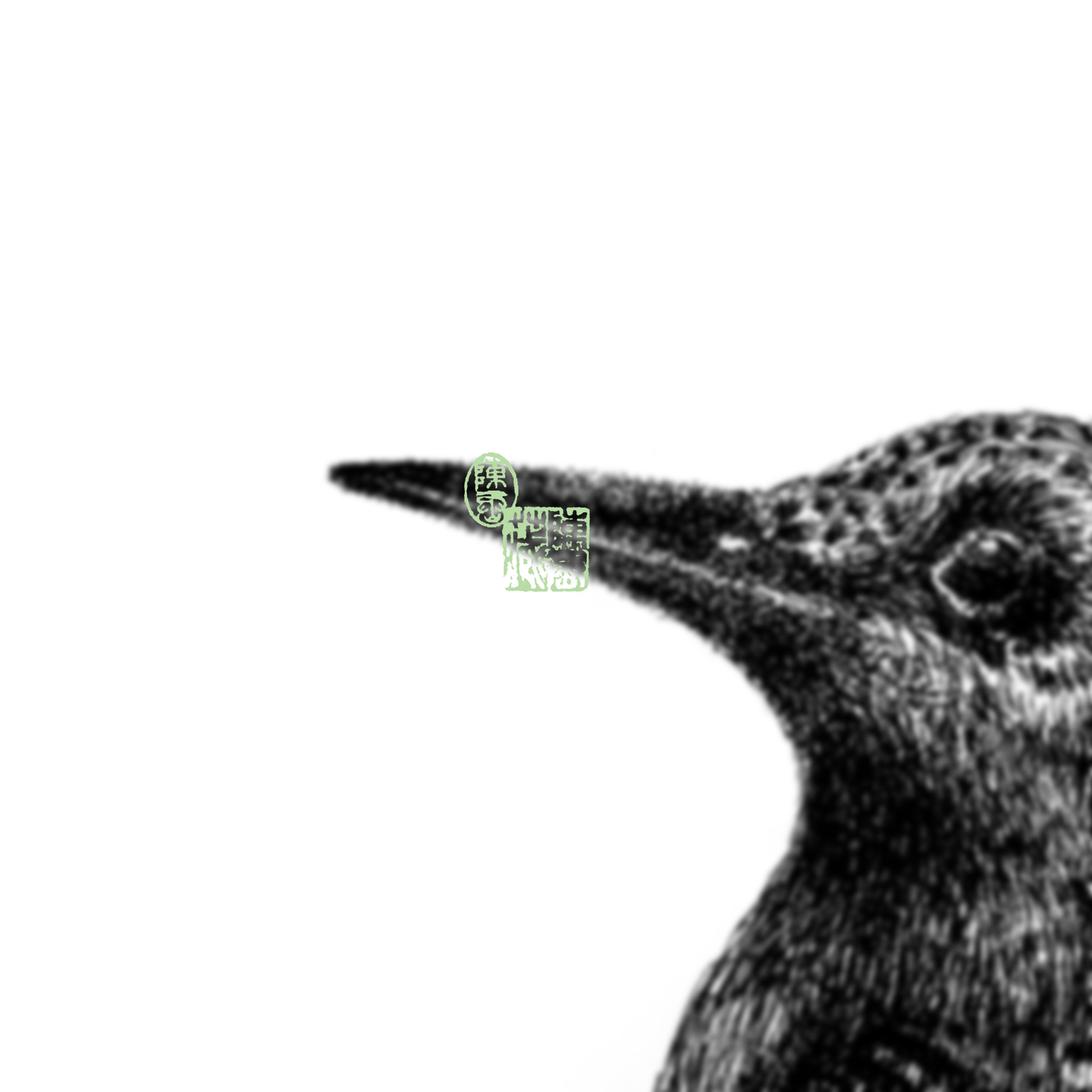 Bird {III}