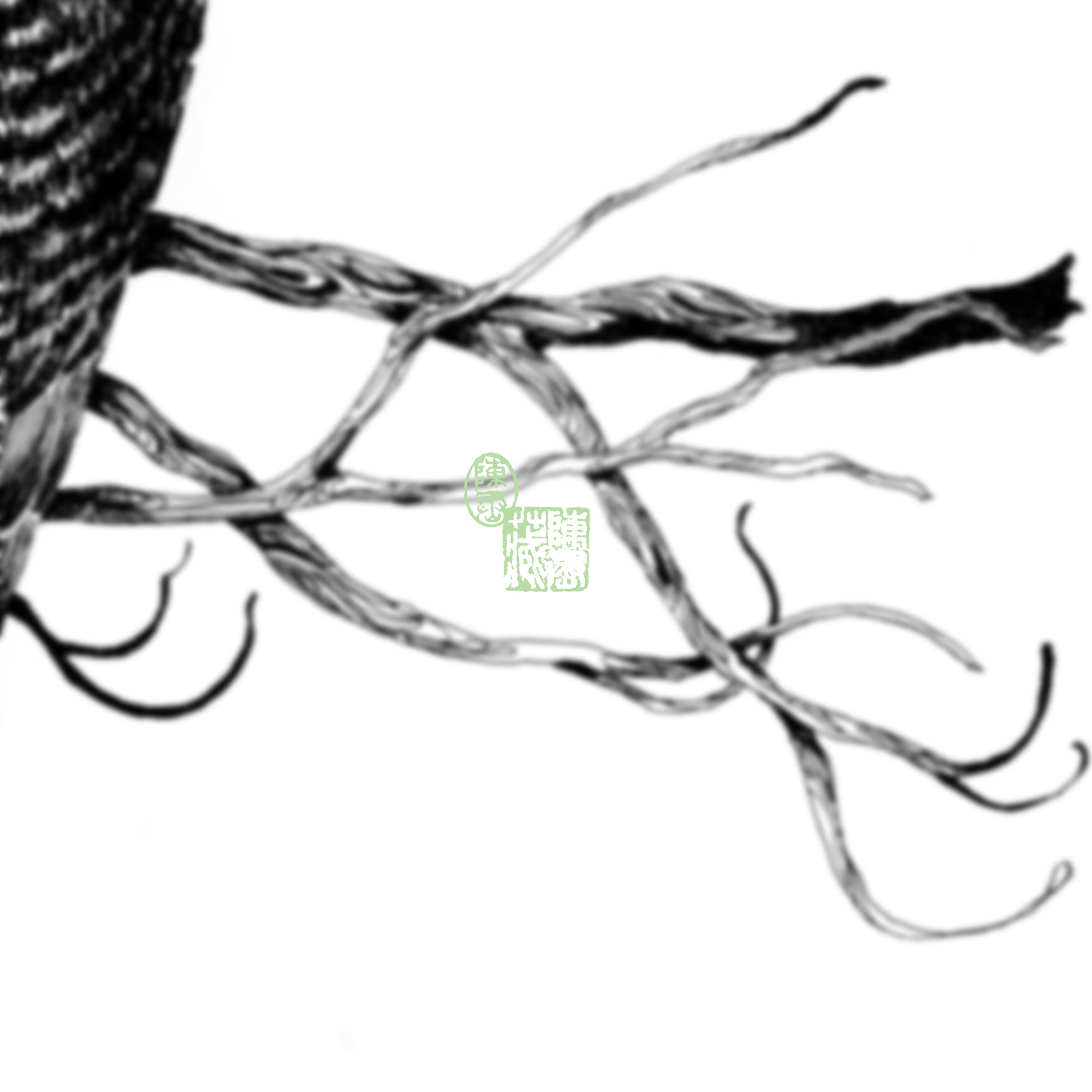 Bird {IV}