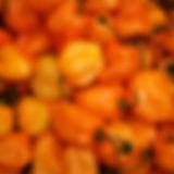 chile-habanero-25761283137901dcVG.jpg