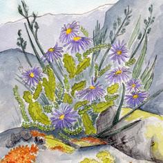 Rocky Mountain Wildflower Detail