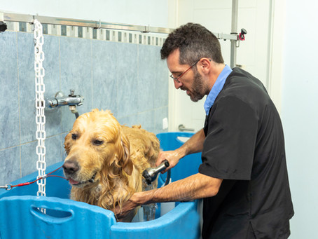 5 Qualities to Look for In a Dog Grooming Service