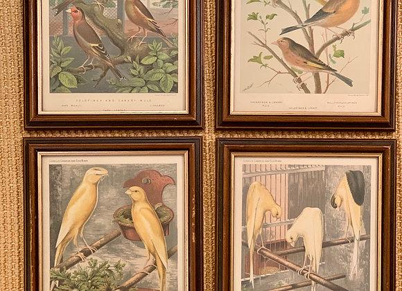 VINTAGE BIRD PRINTS