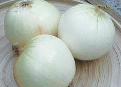Onion White Spanish