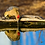 Thumbnail: Pájaro carpintero y su reflejo - Montaje en Acrilico