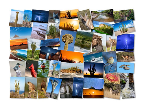 Fotografía digital para Impresión (Descargable)