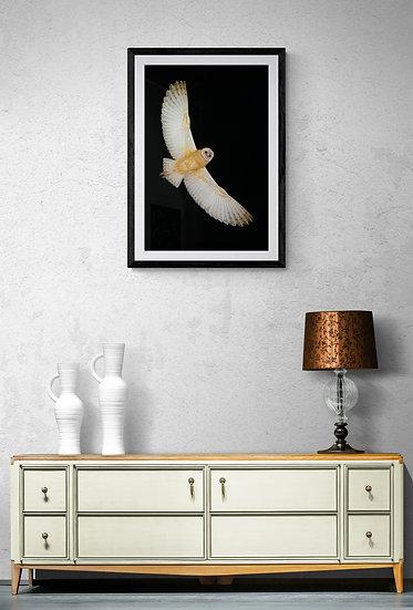 Lechuza de Campanario - Tamaño 50x80cm