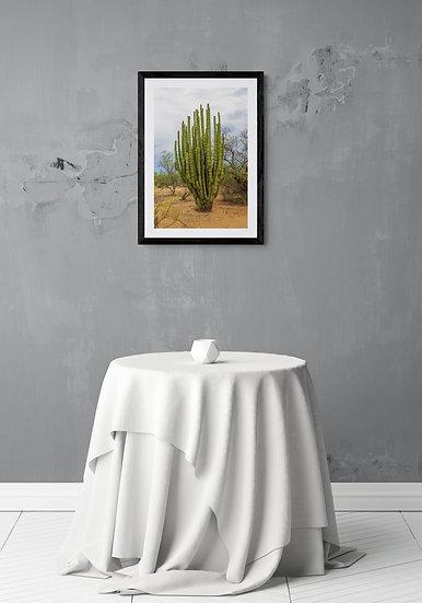 Pitaya en Rancho Viejo - Tamaño 40x60cm