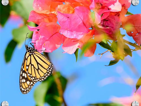 Mariposa Monarca - Digital montada en Acrilico