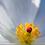 Thumbnail: Flor Silvestre - Montaje en Acrilico