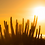 Thumbnail: Cardones en tarde dorada - Montaje en Acrilico