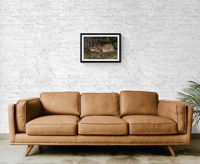 Nocturna de Lince Americano - Tamaño 60x40cm
