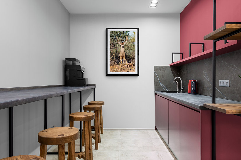 Venado Bura de Sonora - Tamaño 50x80cm