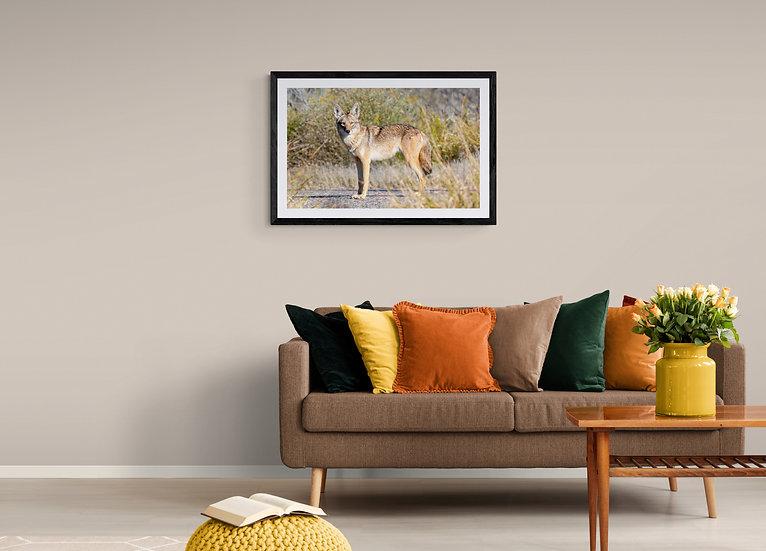 Coyote del Desierto - Tamaño 80x50cm