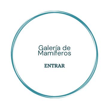 Galería de Mamiferos.png