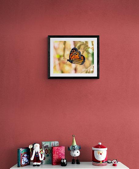 Mariposa Monarca - Tamaño 50x40cm