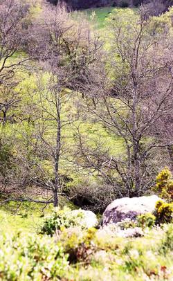 hills-spring