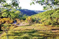 yellow-flowers-hills-(1)
