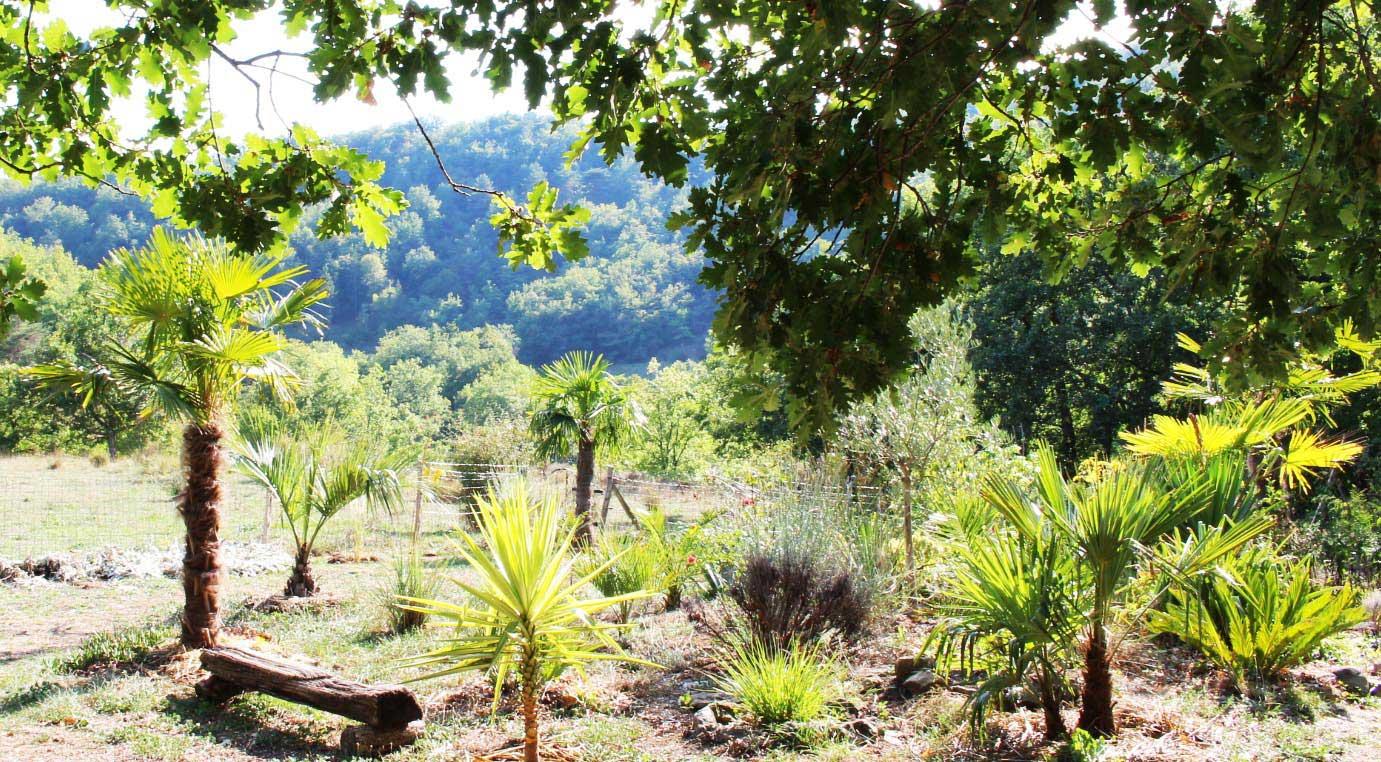 Palmiers,-jardin