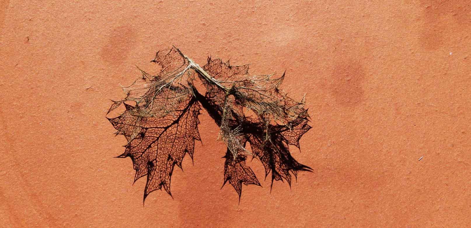 terra-cota-leaf